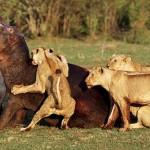 Great hunters Safari