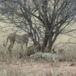 Tanzania tours and safari.