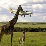 Tanzania fly in safari
