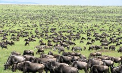 migrationserengeti