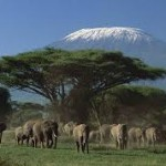 Amboseli 2.