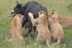 Masai mara 1.