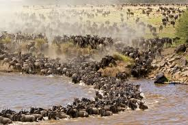 Masai mara 2.
