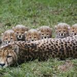 Zimbabwe budget African safari