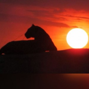 Zimbabwe Sunset Tour