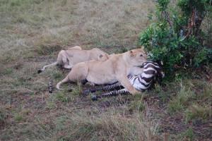 Amazing Zimbabwe safari