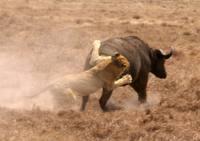 6Day Tanzania safari.