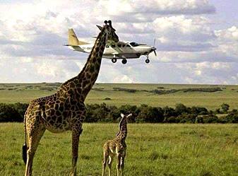 Tanzania fly in safari
