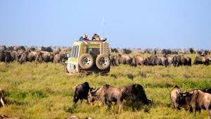 Tanzania serengeti safari.