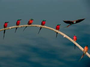 Bird photo 2.